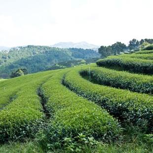 不同的茶文化